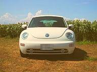 profile_beetle3.jpg